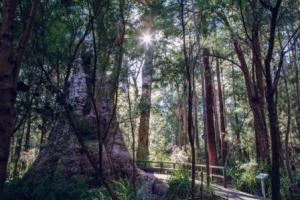 treetop_walk_137